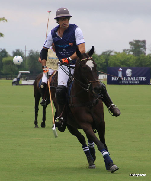 Royalty Visits Wellington As Prince Harry Stops By For Some Polo