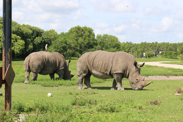 Safari Campers Learn About Rhinos