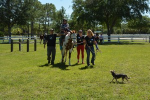 Horses Help (07)