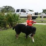 RPB Dogs (11)
