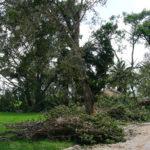 Irma RPB (10)