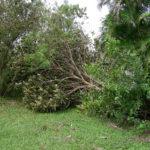 Irma RPB (2)