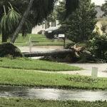 Irma RPB (26)